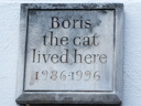 Boris the Cat (id=3600)